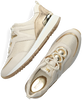 Goldfarbene MICHAEL KORS Sneaker low PIPPIN TRAINER  - small