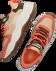 Mehrfarbige/Bunte SCOTCH & SODA Sneaker low CELEST  - small