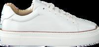 Weiße ROBERTO D'ANGELO Sneaker low FERMO  - medium