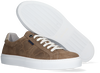 Graue VAN LIER Sneaker low NOVARA  - small
